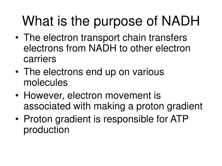 What is the purpose of NADH