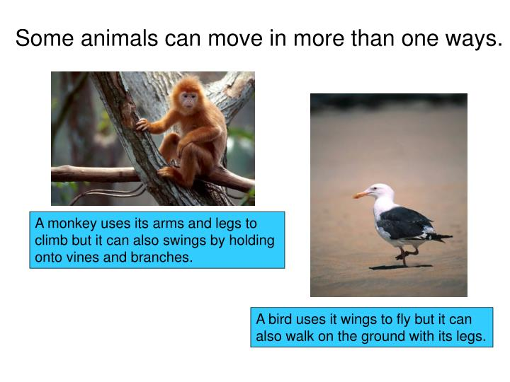 Some animals can move in more than one ways.