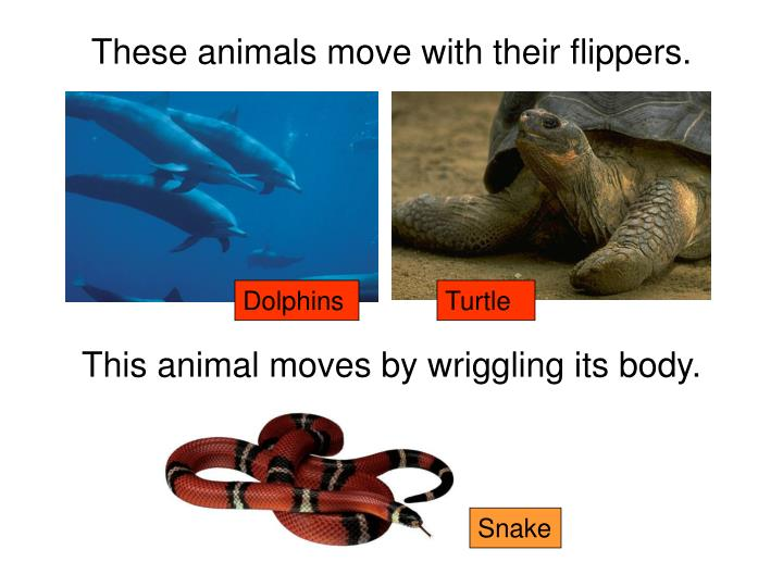 These animals move with their flippers