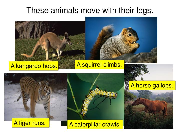 These animals move with their legs