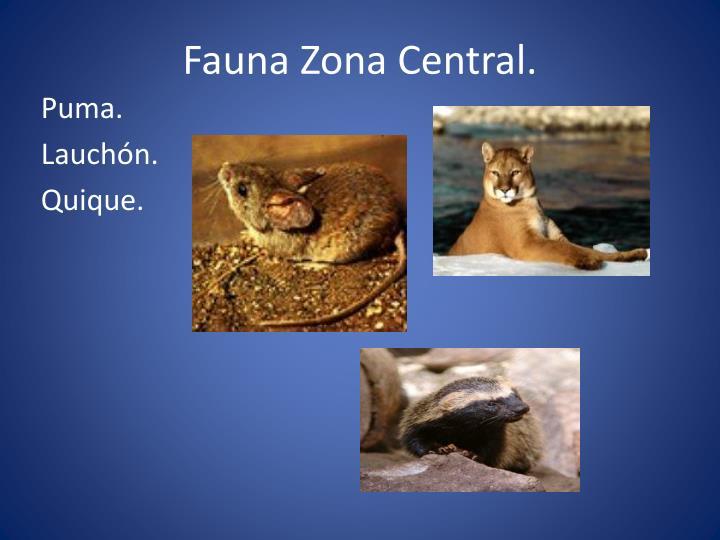Fauna Zona Central.