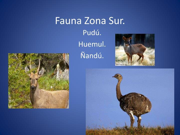 Fauna Zona Sur.