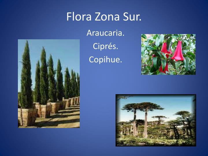 Flora Zona Sur.