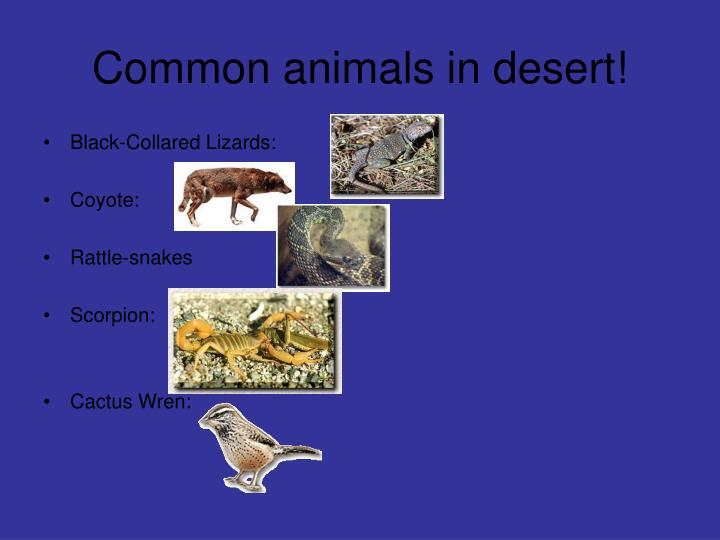 Common animals in desert!