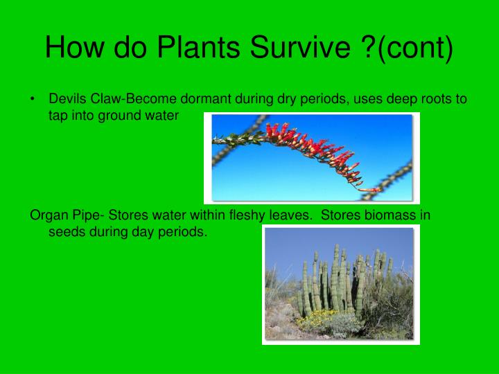 How do Plants Survive ?(cont)