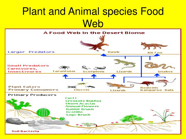Plant and Animal species Food Web