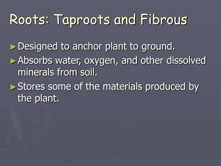 Roots: Taproots and Fibrous
