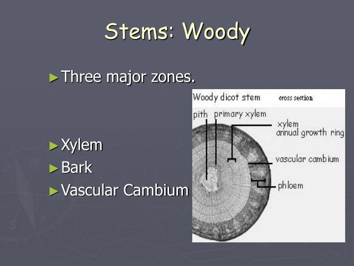 Stems: Woody