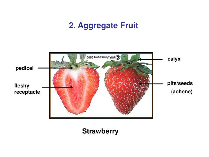 2. Aggregate Fruit