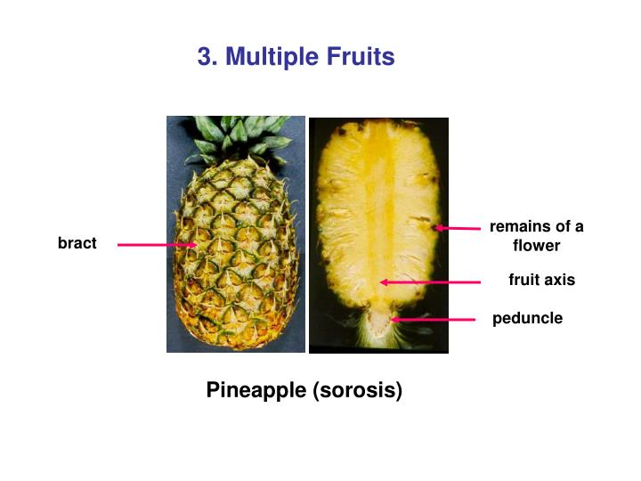 3. Multiple Fruits