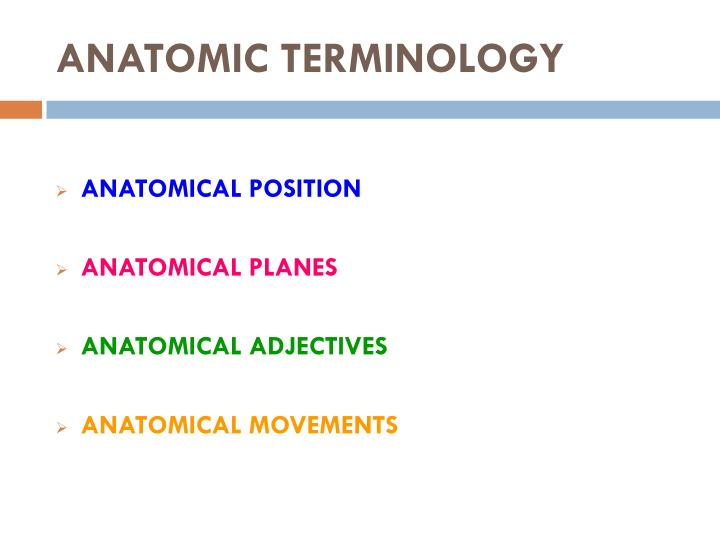 Medical terminology anatomy