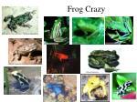 frog crazy