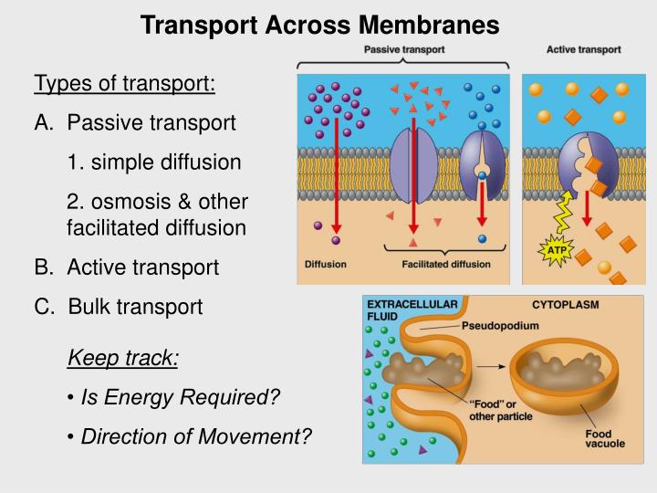 Transport Across Membranes