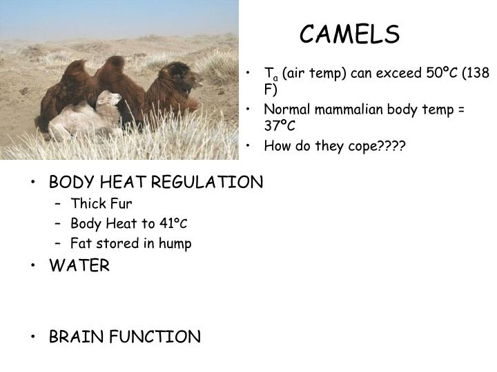 BODY HEAT REGULATION