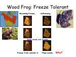 wood frog freeze tolerant