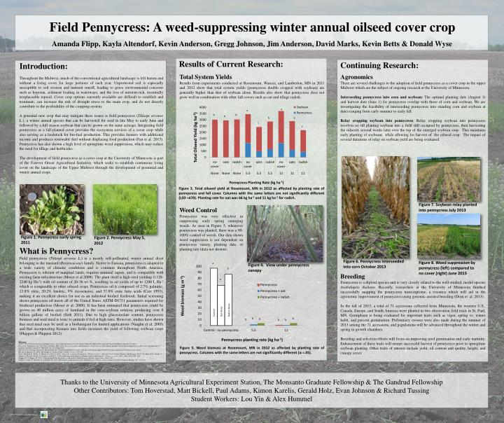 Field Pennycress: A weed-suppressing winter annual oilseed cover crop