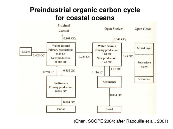Preindustrial organic carbon cycle