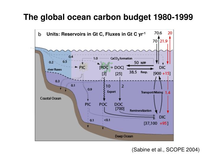 The global ocean carbon budget 1980-1999