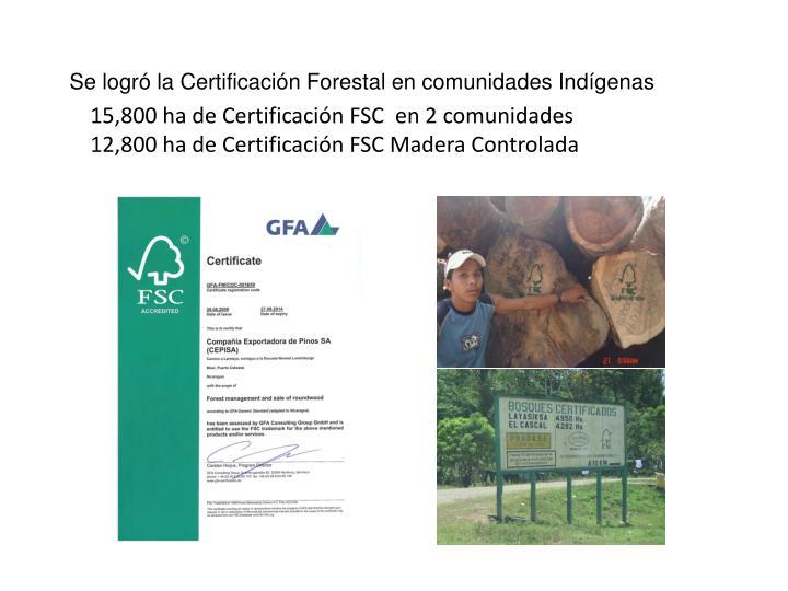 15,800 ha de Certificación FSC  en 2 comunidades
