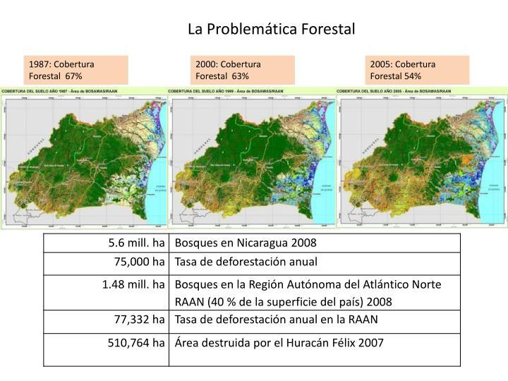 La Problemática Forestal