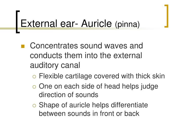 External ear- Auricle