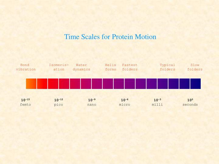 Time Scales for Protein Motion