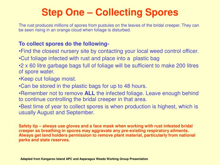 Step one collecting spores