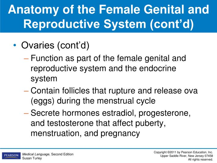 Anatomy of the Female Genital and Reproductive System (cont'd)