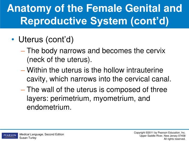 Uterus (cont'd)