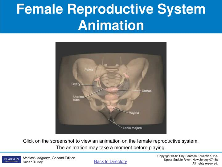 Female Reproductive System Animation