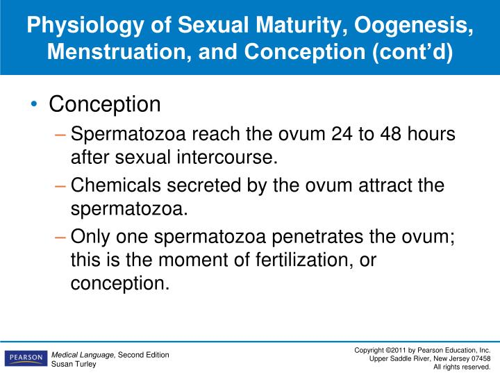 Physiology of Sexual Maturity, Oogenesis, Menstruation, and Conception (cont'd)