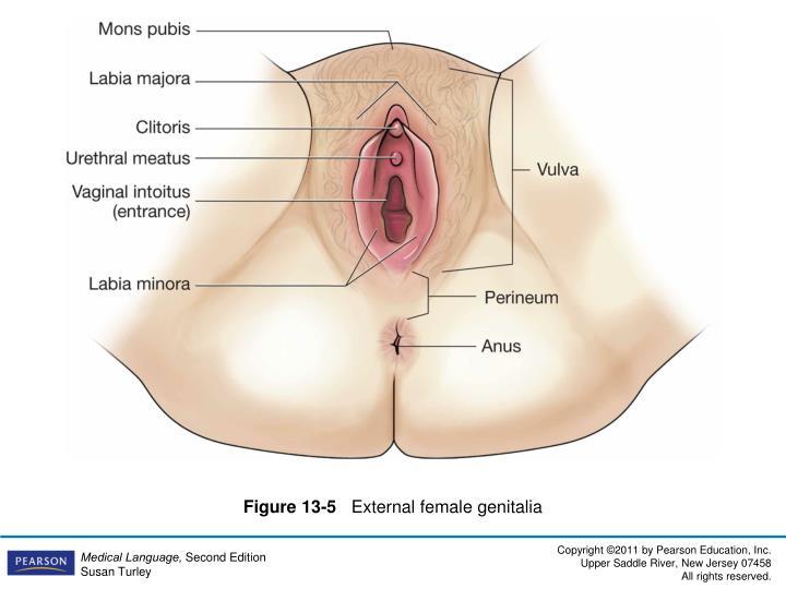 Figure 13-5