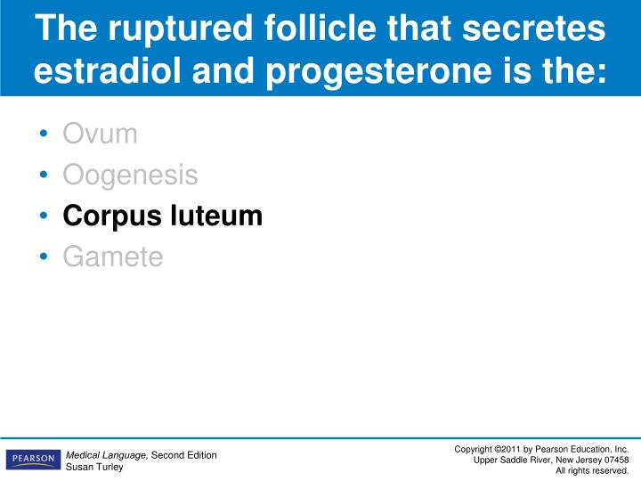 The ruptured follicle that secretes estradiol and progesterone is the:
