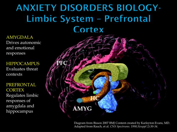 Anxiety disorders biology limbic system prefrontal cortex