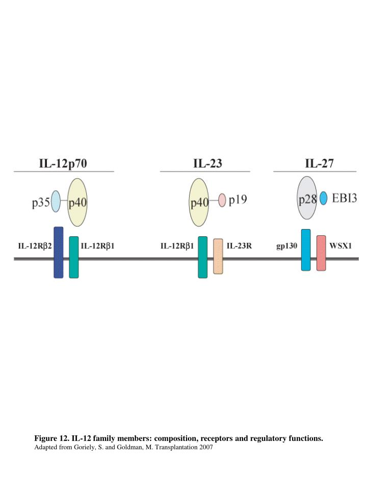 Figure 12. IL-12 family members: composition, receptors and regulatory functions.