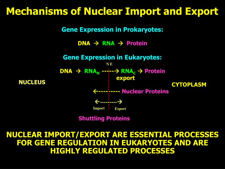 Mechanisms of Nuclear Import and Export