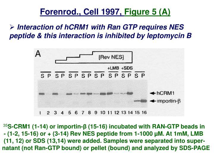 Forenrod., Cell 1997,