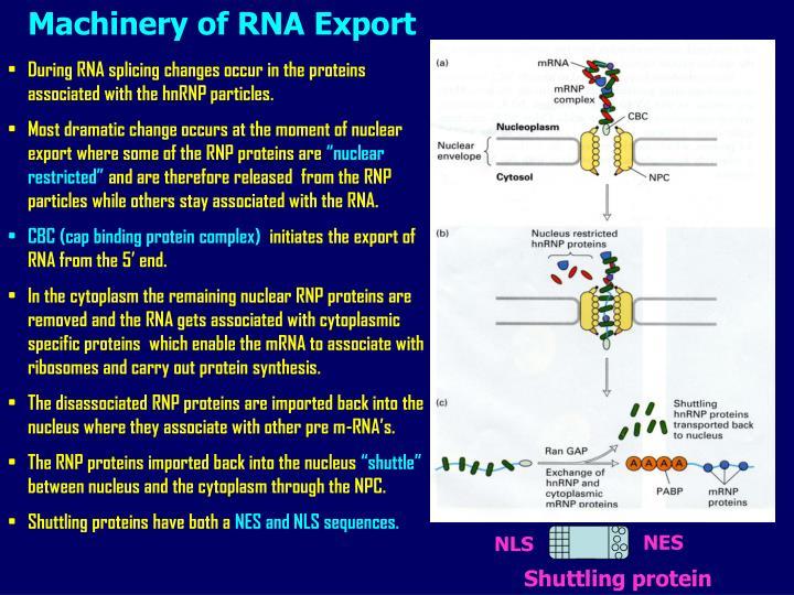 Machinery of RNA Export