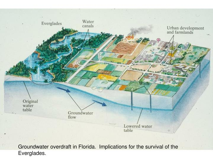 Groundwater overdraft in Florida.  Implications for the survival of the Everglades.