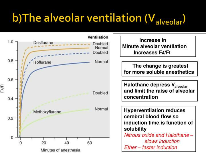 b)The alveolar ventilation (