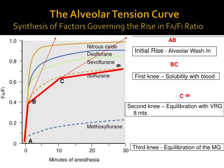 The Alveolar Tension Curve