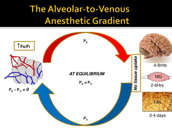 The Alveolar-to-Venous                Anesthetic Gradient