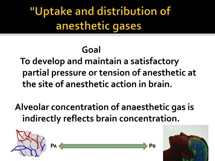 Uptake and distribution of anesthetic gases