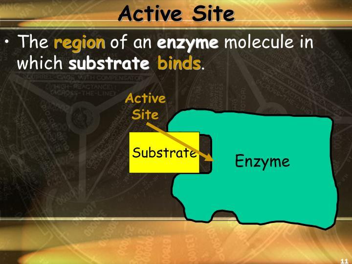 Active Site