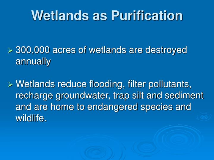 Wetlands as Purification
