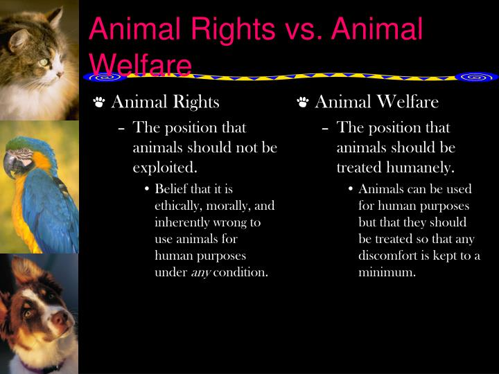 the animal welfare act of 1998 essay Us regulations and requirements listed below are the regulations governing the use of animals in research in the united states the animal welfare act.