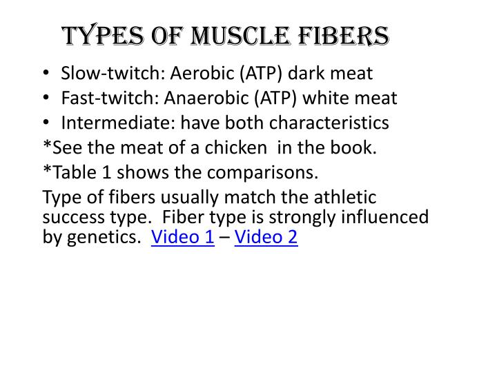 Types of muscle fibers
