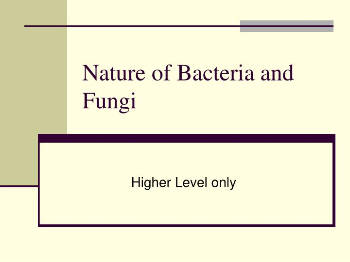 Nature of bacteria and fungi