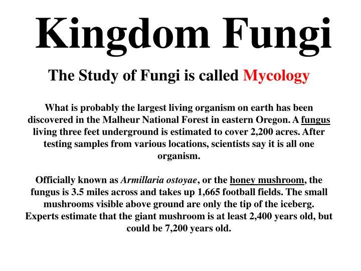 Kingdom Fungi