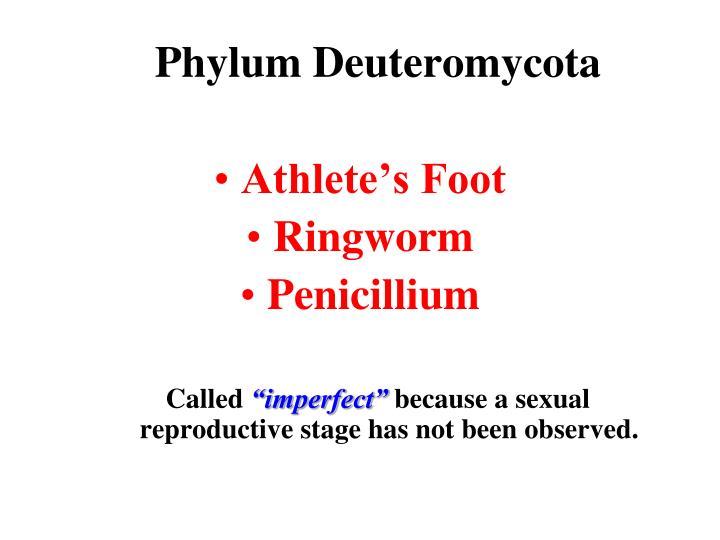 Phylum Deuteromycota